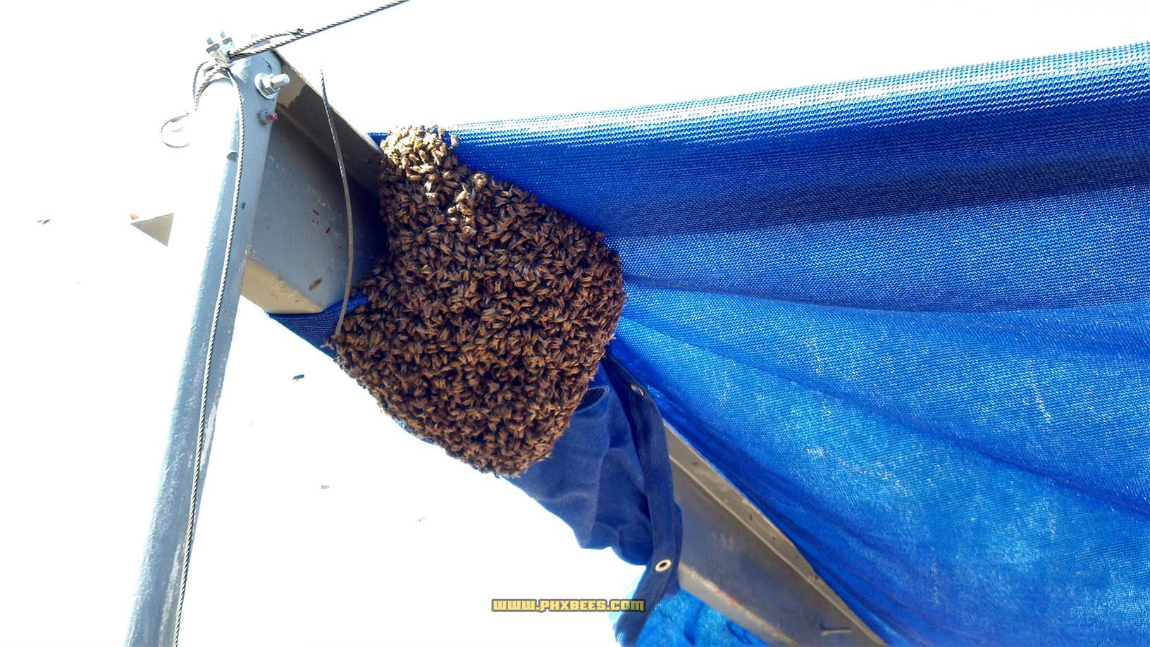 Bees settled on an awning