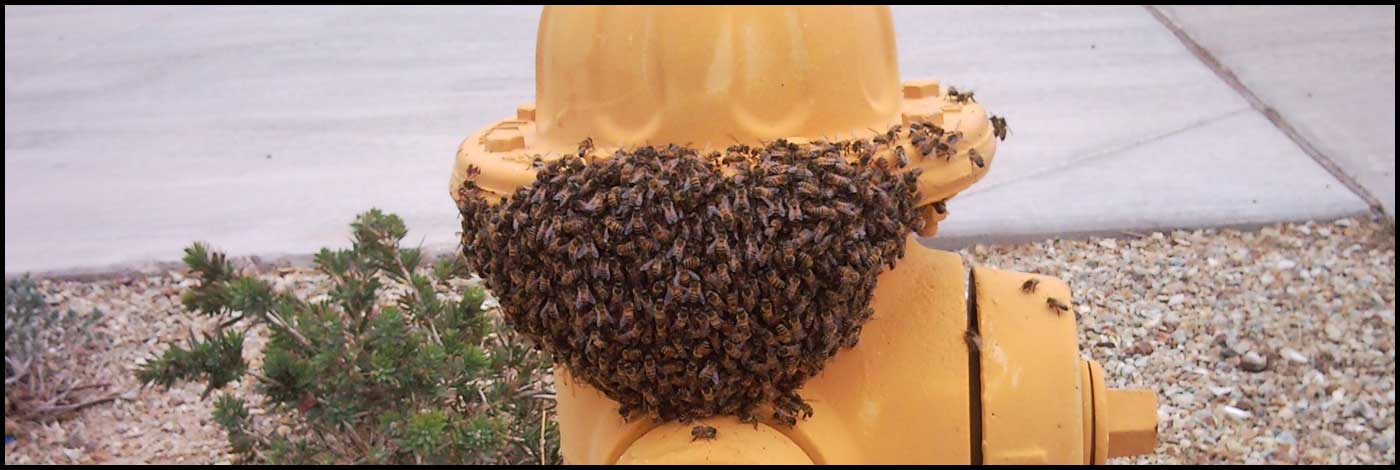 Bees on a fir hydrant