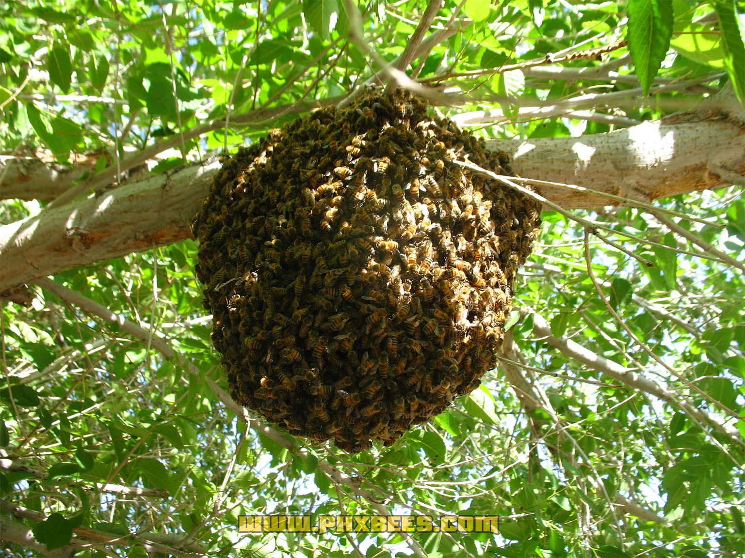 Small swarm on a branch