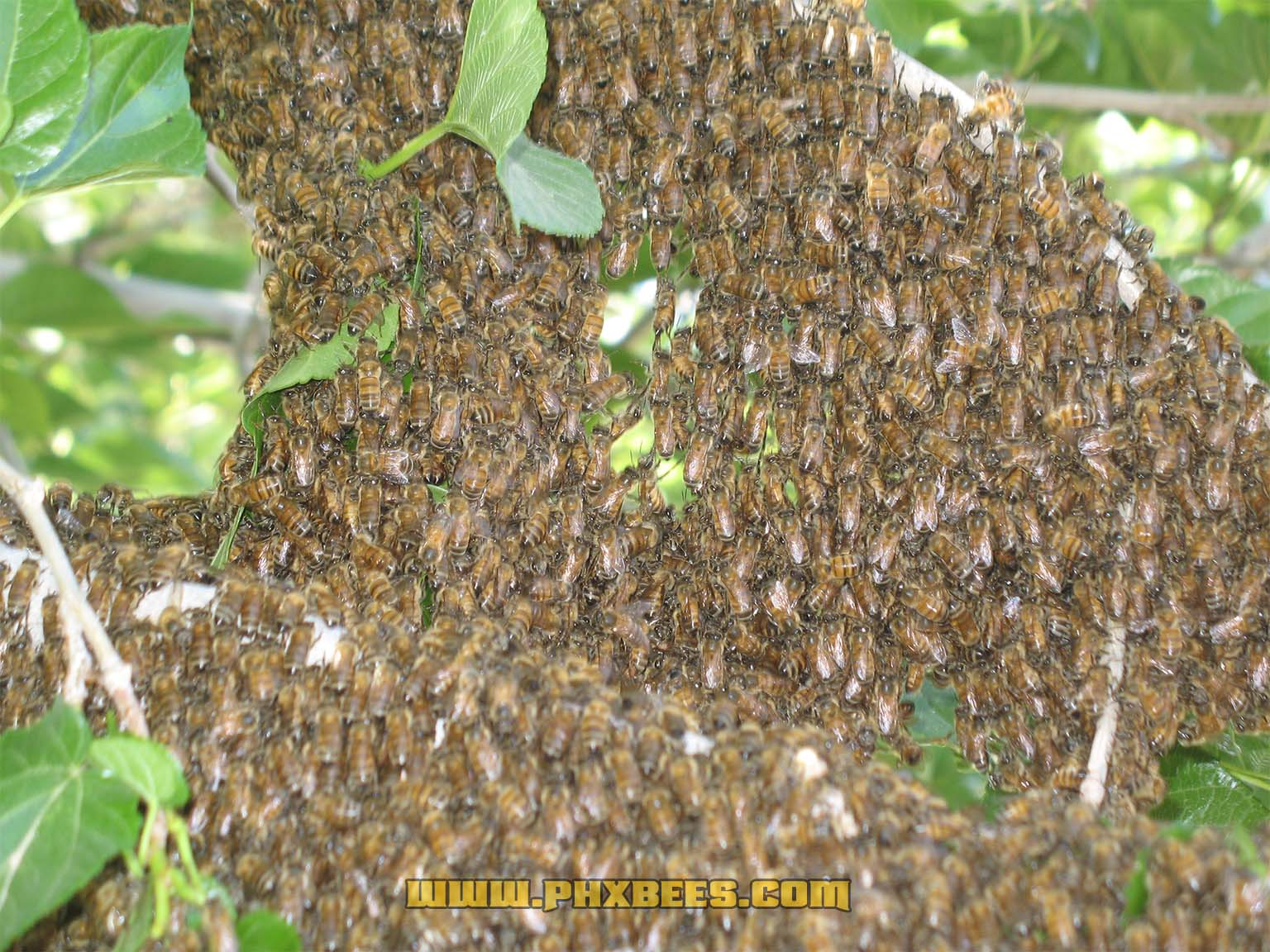 Close-up bee swarm