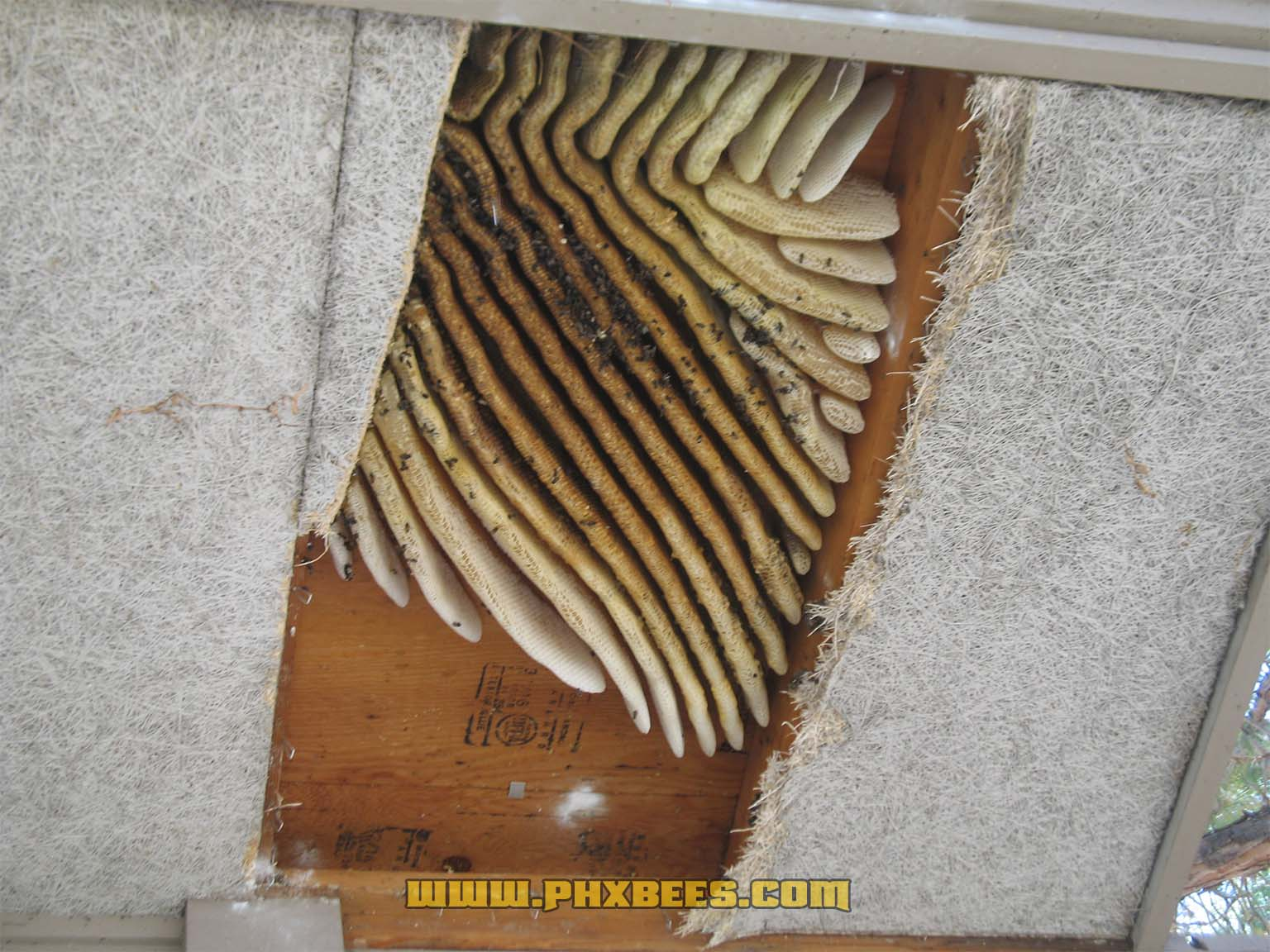 Massive bee hive in a soffit