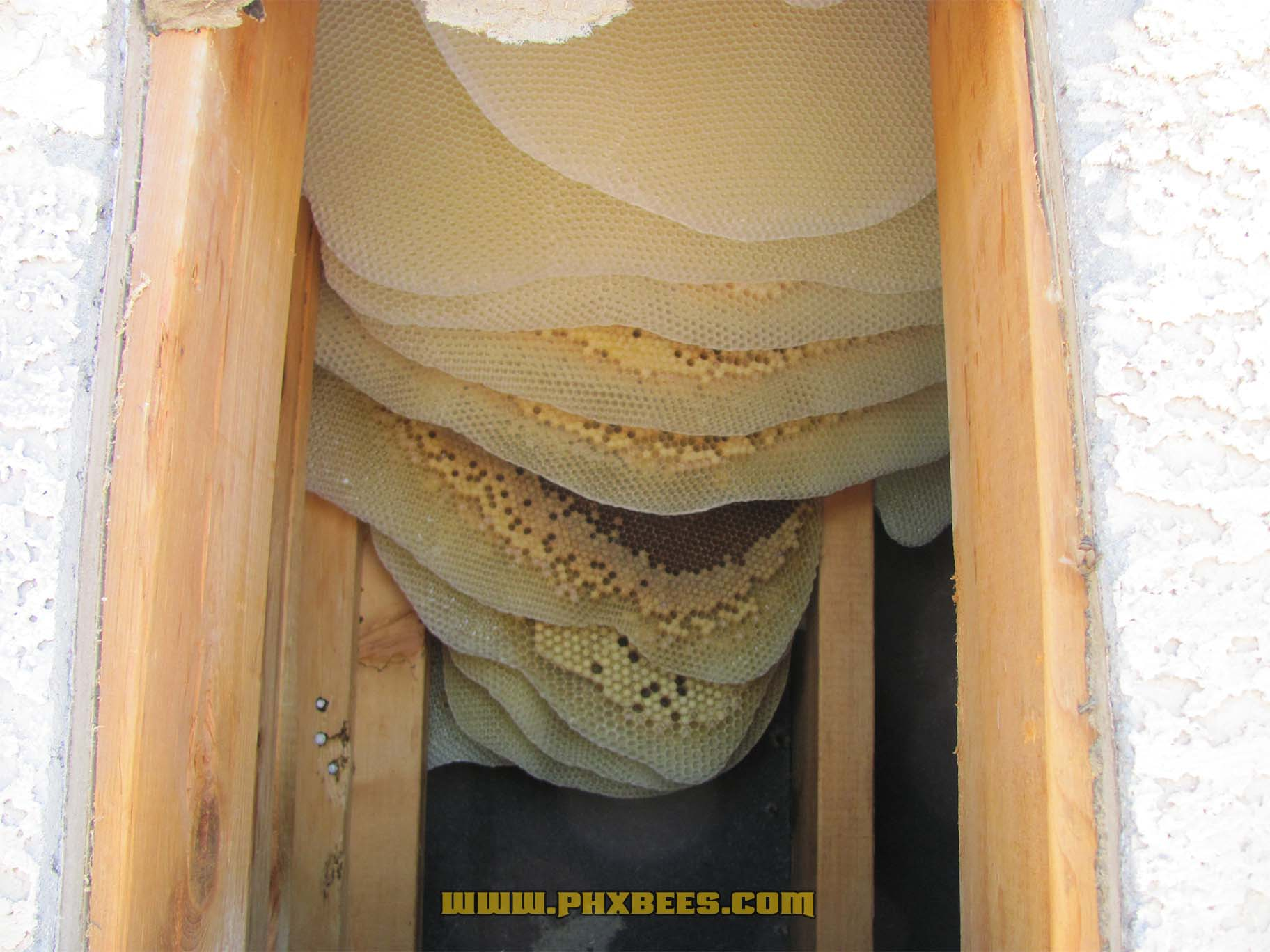 Honeycomb inside a column on a home in Phoenix