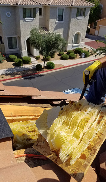 Honeycomb being removed from inside of a roof