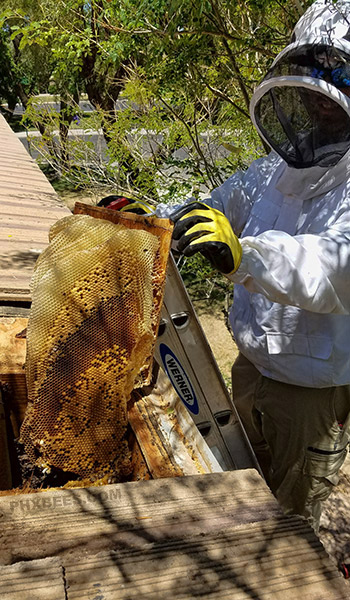 Honeycomb removal surprise arizona