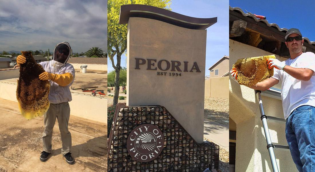 Bee Removal Service Peoria Arizona