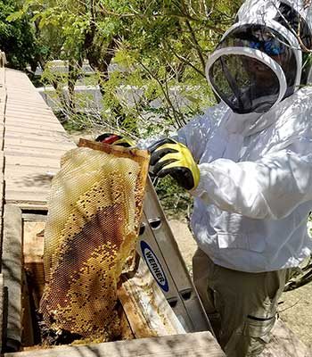 Honeycomb Removal Gilbert AZ