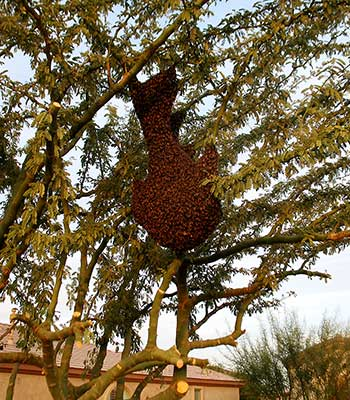 Swarm Removal Sun City West